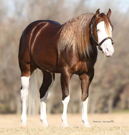 Famous Stallions Stoney S Reining Horses For Sale Famous