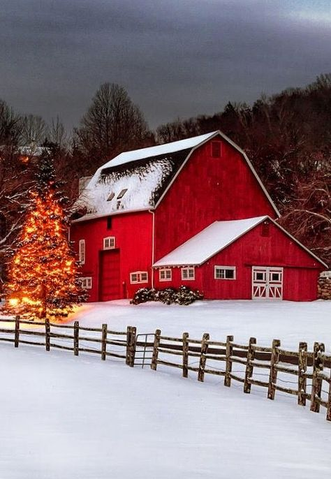 Christmas lights adorn a tree in the shadow of a beautiful rustic red barn in the Litchfield Hills of Connecticut. Country Christmas, Merry Christmas, Cabin Christmas, Cabana, Barn Pictures, Illustration Noel, Country Barns, Farm Barn, Cottage