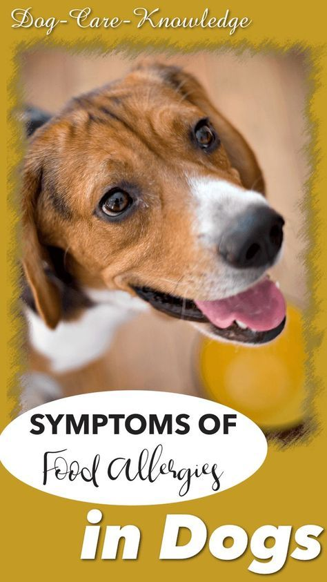 Canine Food Allergies Or Intolerance What You Need To Know Dog