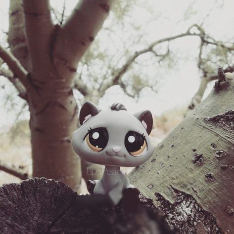 Grey kitten lps in woods❤️