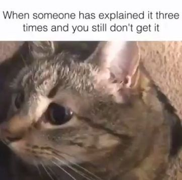 Super Funny Things To Cheer Someone Up 47 Ideas Funny Cat Faces Funny Cats Dog Quotes Funny