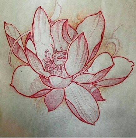 Flowers Sketch Lily 40 Ideas Japanese Flower Tattoo Lotus Flower Tattoo Design Lotus Flower Drawing