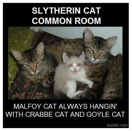 A Cat Eating Harry Potter Harry Potter Insults Cat Quotes Funny Harry Potter Memes Hilarious Cat Memes