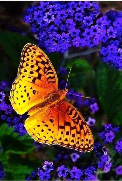 Natural Beauty Natural Cleaners Eyebrows Natural Natural Coloring Natural Picture Natural Makeu Beautiful Butterflies Butterfly Species Butterfly Pictures