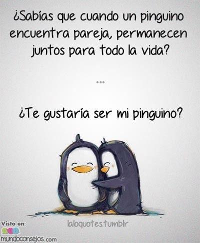 Cuando un pinguino encuentra pareja permanecen juntos para toda