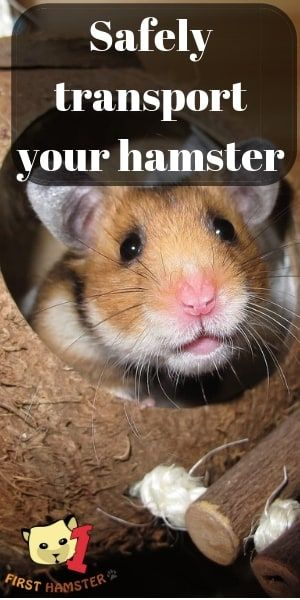 How To Safely Transport Your Hamster Best Travel Cages Hamster