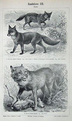 Hirsch Hase Fuchs Muster Vintage Wörterbuch Seite Wandkunst Bild Tiere in