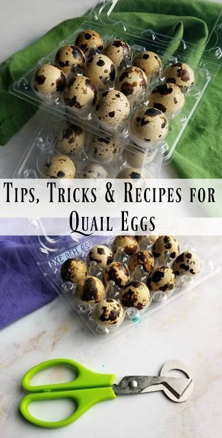 If you are looking for great ways to use quail eggs, you have come to the right spot. There are so many great ways to use the cute little eggs in all sorts of appetizers and meals! Here are some tips, tricks and recipes for quail eggs. Quail Recipes, Egg Recipes, Budget Recipes, Recipies, One Bite Appetizers, Yummy Appetizers, High Protein Snacks, Prosciutto, Pickled Quail Eggs