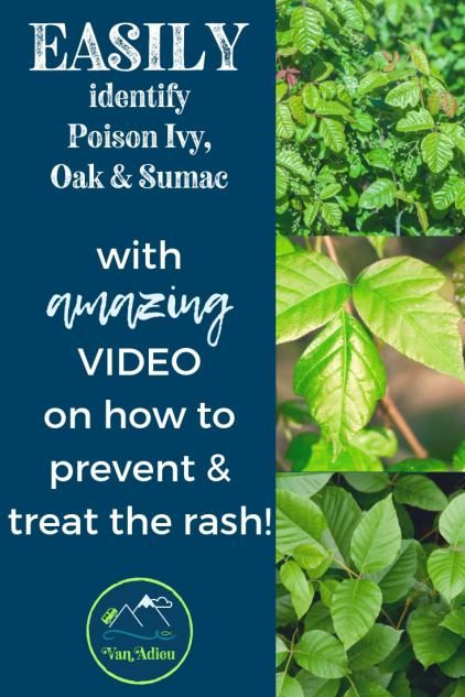 Identify Poison Ivy Oak And Sumac And How To Prevent A Rash