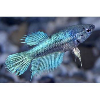 Prop Bet Fish - image 2
