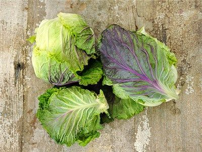 Image result for Cabbage 'Violaceo di Verona'