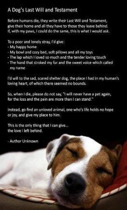 58 Trendy Dogs Quotes Funny Spoiled Dog Quotes Funny Dogs Dying