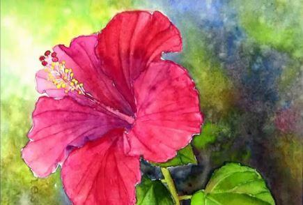 Dessin Et Peinture Video 2314 Comment Peindre L Hibiscus Rouge