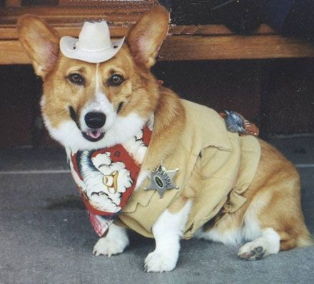 halloween photo contest whiskey dog halloween costumes pinterest halloween photos dog halloween and dog