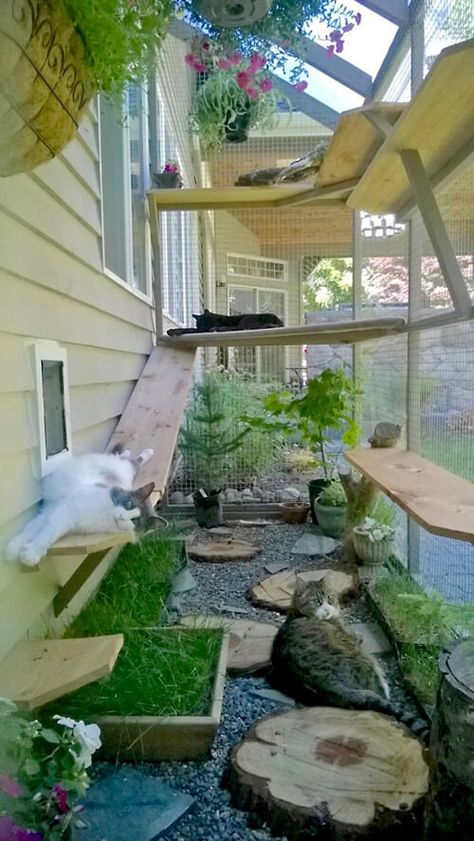 catio cat enclosure cats lounging interior haven c. catio cat enclosure cats lounging interior haven catiospaces Outdoor Cat Enclosure, Diy Cat Enclosure, Garden Enclosure Ideas, Garden Ideas, Patio Ideas, Cool Backyard Ideas, Dog Enclosures, Backyard Designs, Reptile Enclosure