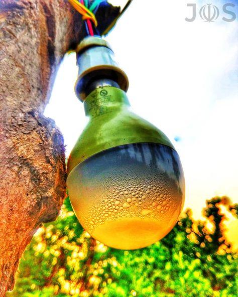 """In nature, light creates the color. In the picture, color creates the light."" #photography #mobilephotograpy #instalove #instapic #beautiful #instalike #instadaily #instagood #instagram #photooftheday #portrait #colorful #art #color #lightbulb #design #desktop #nature_lovers #insta_ac #naturelovers #naturephotography #nature #golden #motivational #glassofig #gl"