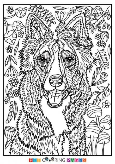 Super Dogs Drawing Simple Border Collie 25 Ideas In 2021 Horse Coloring Pages Dog Drawing Simple Dog Coloring Page