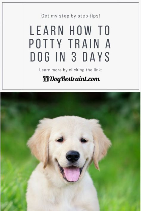 How To Potty Train A Dog In 3 Days Dog Training Dogs Training