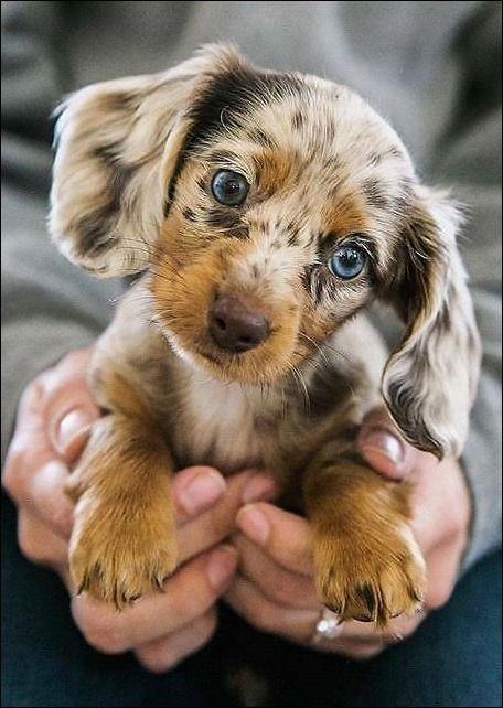 Crescentmoon Animalia Welpenbilder Susse Baby Tiere Lustige Tierfotos