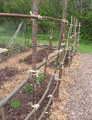 Low Cost Deer Barrier: Branch And Twine Fence. Slender Branches Saved From  Tree Trimming Can Create An Attractive Natural Looking Fence. Use Twinu2026