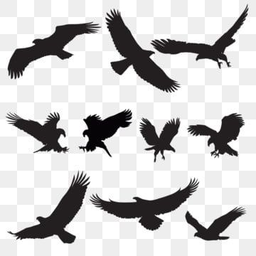 Eagle Silhouette Flying Bird Silhouette Bird Silhouette Eagle Png And Vector With Transparent Background For Free Download Flying Bird Silhouette Eagle Silhouette Bird Silhouette