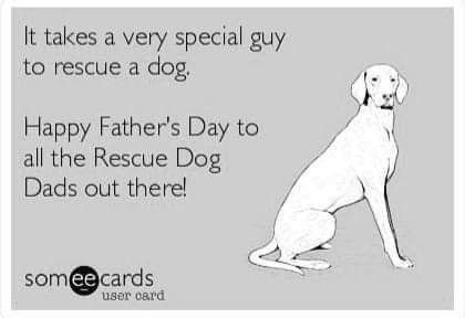 Pin By Karen Georg On Posts For Chu Chu Happy Fathers Day Dog Dad Happy Father