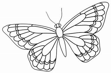 Image Result For Blank Zentangle Templates Elephants Butterfly