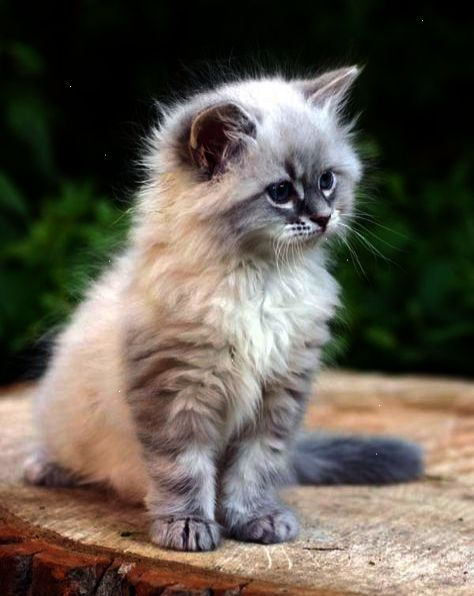 Impressive Cute Cats For Sale In Karachi Xoxo Cute Cats Fluffy Kittens Kittens Cutest