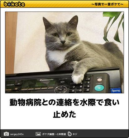 Pin By Swdcazx On 面白い話 Animals Funny Cats