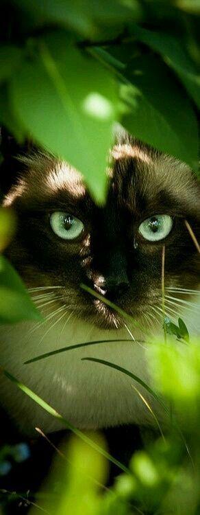 Lässt Sturm. ShadeClan medizinische Katze. Ihr Name kommt von der Tatsache, dass ...