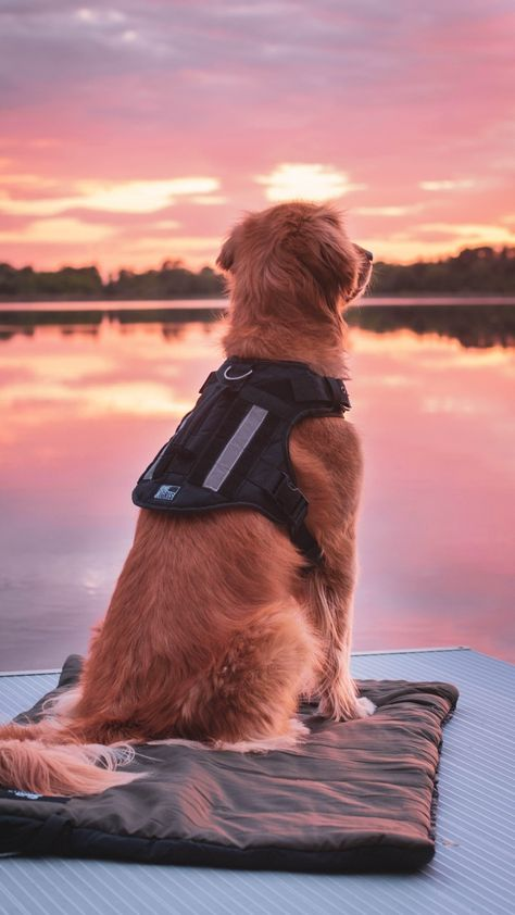"""She was not a chapter, she was the whole story."" ❤️ #OneTigris #dogharness #doglovers #goldenretriever #servicedog #hikingwithdogs #dogstuff #dogbreeds"