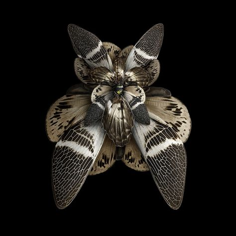 Paris-based photographer Seb Janiak created an awesome series insect wings which are manipulated to look like blooming flowers. It's entitled …