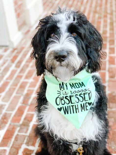 Mom S Obsessed With Me Dog Bandana Dog Bandanna Dog Bandana