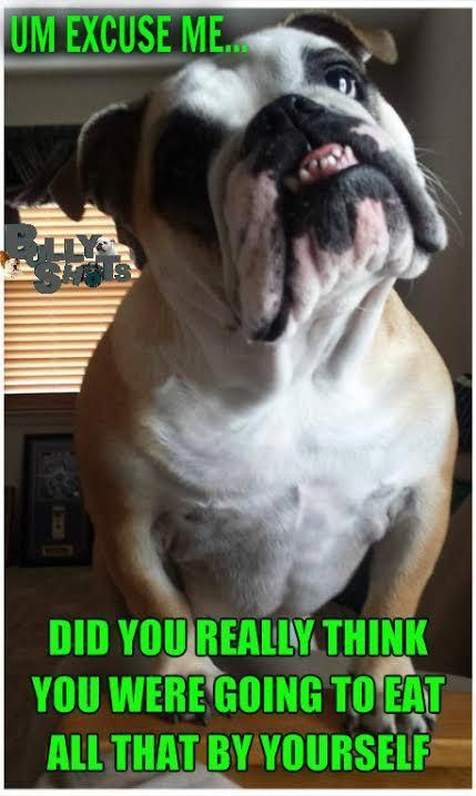 Itchy Coat Remedies For Your English Bulldog Soothing Bulldog