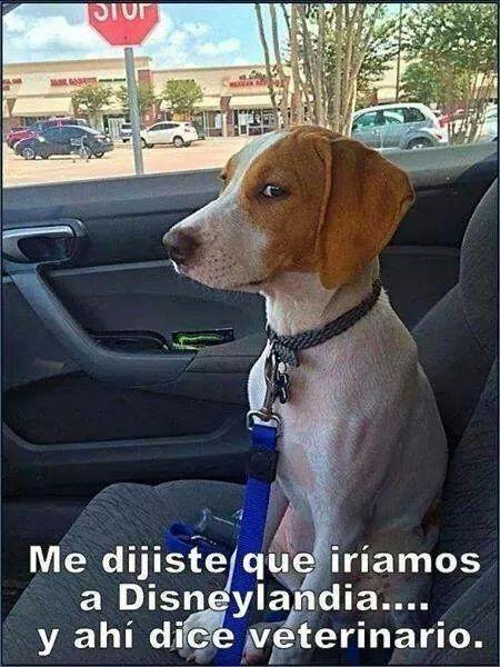 Spanish Jokes For Kids Chistes Para Ninos Funnyspanishlessons Chistes De Perros Perros Graciosos Perros Chistosos