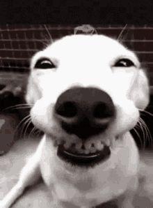 Funny Animals GIFs