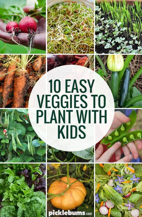 The easiest veggies to grow with kids. Perfect list if you want to start a vegetable garden at home!