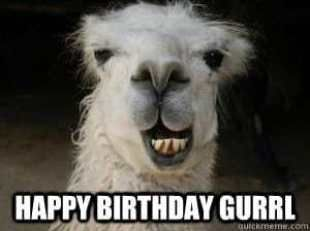 Happy Birthday Gurrl Llama Meme Funny Happy Birthday Meme Funny Birthday Meme Happy Birthday Meme