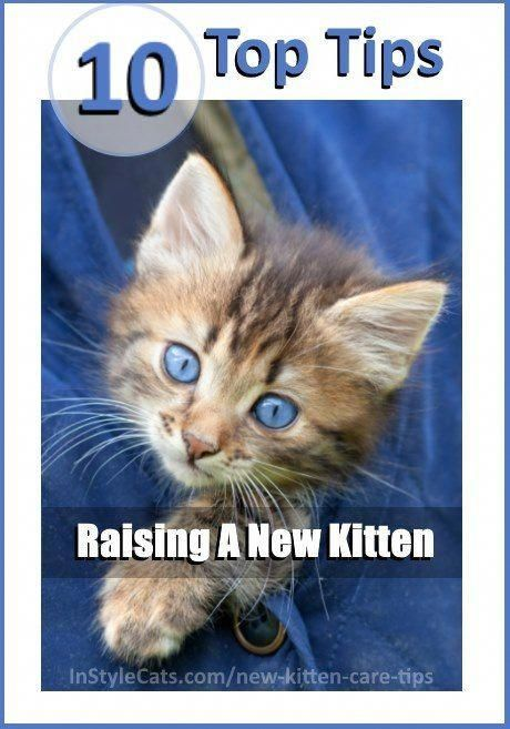 10 New Kitten Care Tips To Help You Prepare For Your Baby Cat When Raising Kittens You Will Naturally Want To Give Them Kitten Care Baby Cats Raising Kittens