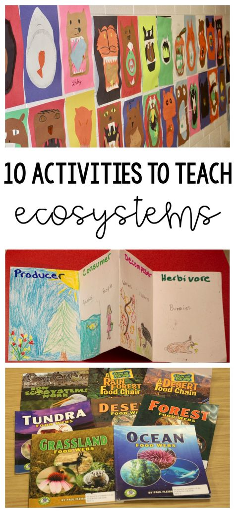 10 Activities to Teach Ecosystems | Teaching Upper Elementary ...