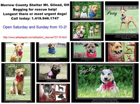 This Shelter In Mount Gilead Oh Is Full Of Wonderful Dogs Please Adopt Rescue Or Share Shelter Dogs Animal Rescue Site Dog Help