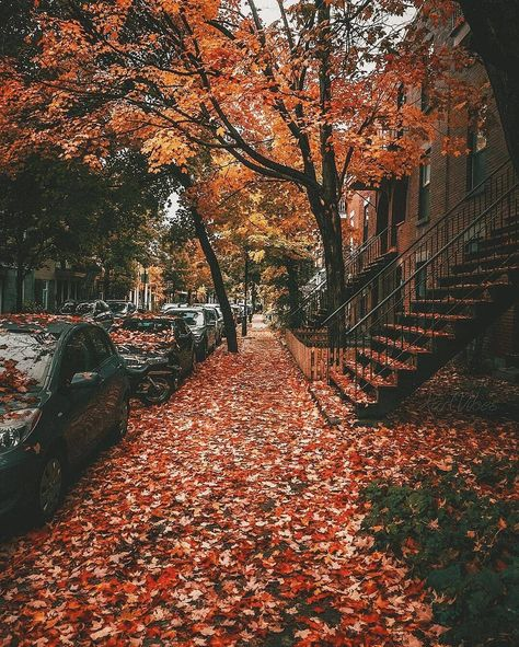 Montreal, Quebec, Canada 🇨🇦 by Travels Fervor Fall Pictures, Fall Photos, Autumn Cozy, Fall Winter, Foto Gif, Autumn Scenery, Fall Wallpaper, Sunset Wallpaper, Screen Wallpaper