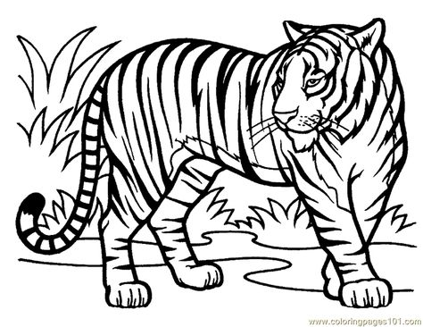 Pages Tiger Mammals Free Printable Coloring Page Online Enjoy Coloring Tiger Drawing For Kids Tiger Drawing Animal Coloring Pages