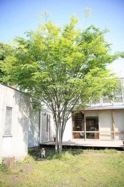 庭の木 おしゃれまとめの人気アイデア Pinterest Mk 2020 庭