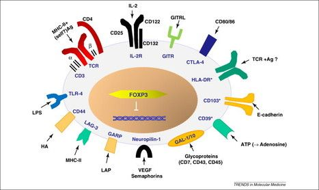 Critical Immune System Control Mechanism Discovered Immune