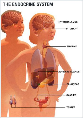 About the Pituitary Gland and its effects on all aspects of your daily life.