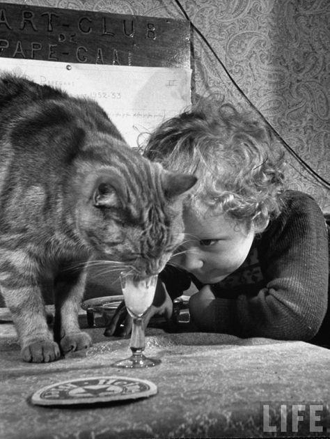 Fotos históricas de gatos | Gatos em História