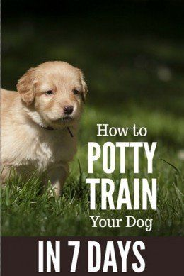 How To Potty Train A Dog In 7 Days Training Your Dog Training