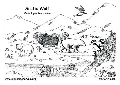 Arctic Habitat Coloring Pages Collection (With images