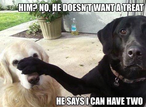 This is totally Kodi our Malamute and Sam our lab mix when it comes to treats!